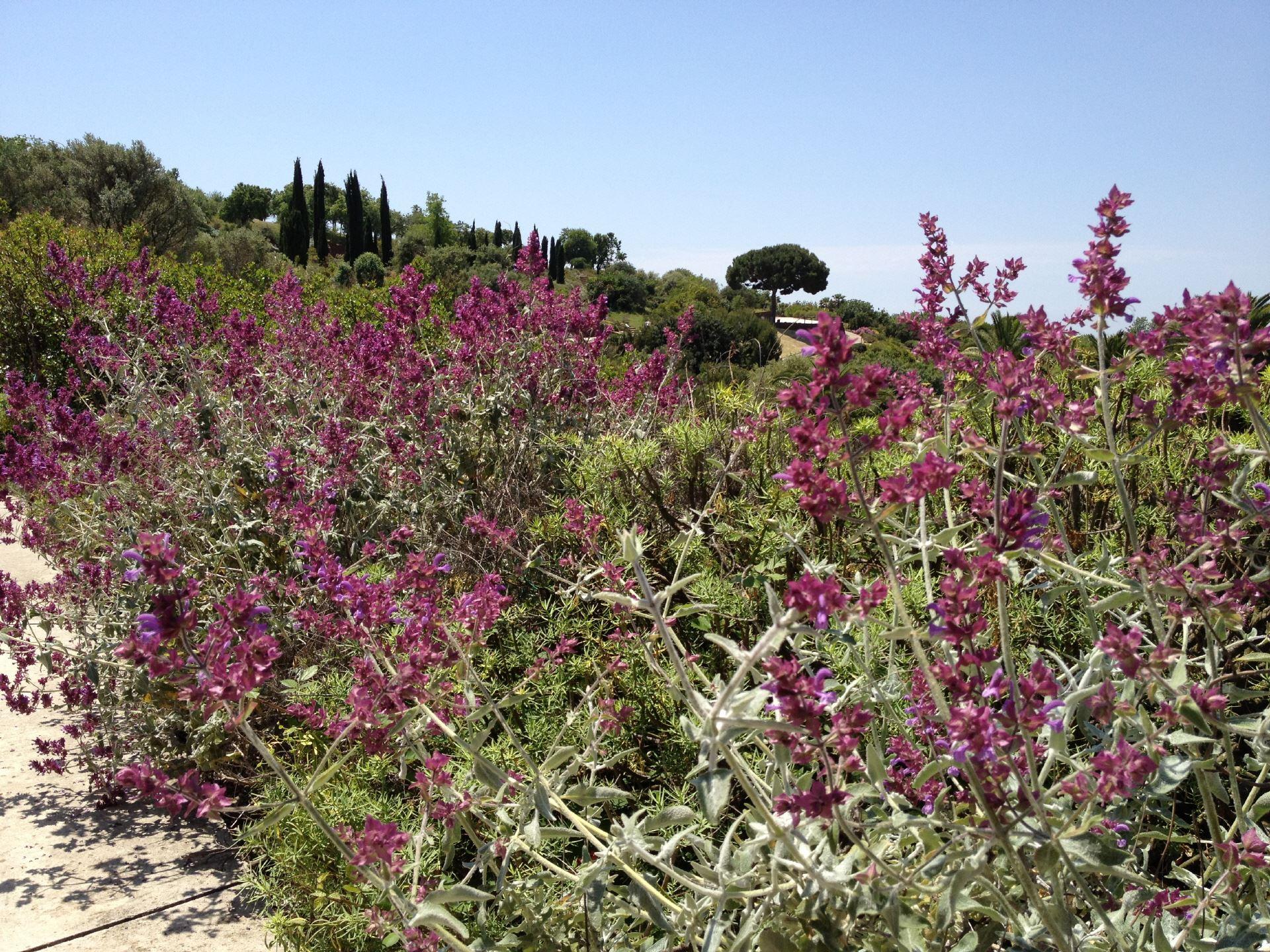 Botanischer Garten Von Barcelona